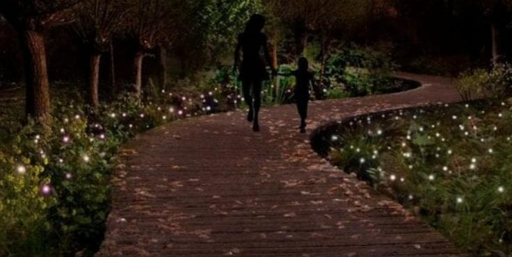 Plantlichtjes
